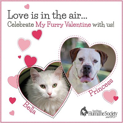 Promotional graphic for the My Furry Valentine Adoption E...