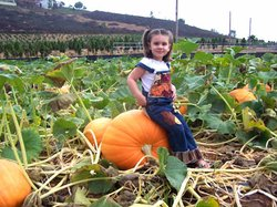 Promotional graphic for the 2014 Rancho Bernardo Pumpkin Patch. Courtesy of Pumpkin Station.