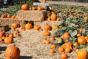 Promotional graphic for this year's Summers Past Farm's October pumpkin patch. Courtesy of Summers Past Farms.