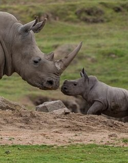 Promotional photo for the San Diego Zoo Safari Park Mother's Day Brunch on May 11th, 2014. Courtesy of the San Diego Zoo Safari Park.