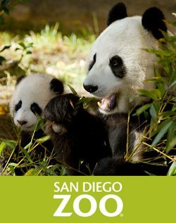 Promotional graphic for the San Diego Zoo.