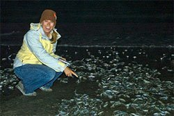 One of the Grunion Run participants points to the spawning fish.