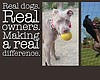 "Promotional graphic for local non-profit San Diego Pittie Parents ""Real Dogs. Real Owners. Making a Real Difference."" LEFT: Luna (San Diego) adopted from Labradors and Friends Dog Rescue; CENTER: Nini (Chicago, IL) adopted from It's a Pittie Rescue; RIGHT: Faith the Surfing Pit Bull (Lakeside, CA) rescued as a stray"