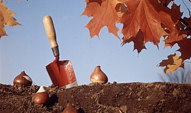 "Promotional photo for the ""Fall Is For Planting"" class."