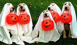 Promotional photo for the Howl-O-Ween Carnival. Courtesy of Ocean Beach Kiwanis