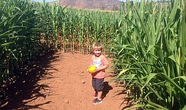 Promotional photo of the corn maze at Bonita Pumpkin Farm