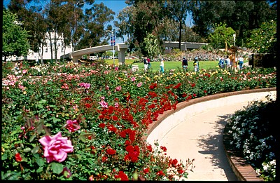 Volunteer Meeting Balboa Park Rose Garden August 16