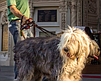 """Promotional photo for the """"Bark in Balboa Park"""" event. Courtesy of the Spreckels Organ Society."""