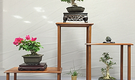 Promotional photo of bonsai trees.