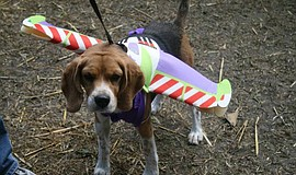 Photo of Pup Lightyear courtesy of Bates Nut Farm.