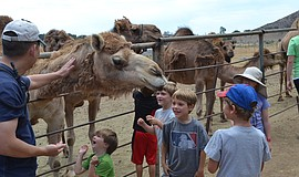 Guests enjoying the open farm tour. Courtesy of Oasis Camel Dairy.