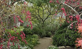Promotional photo of a peaceful garden. Courtesy of California Center for Cre...