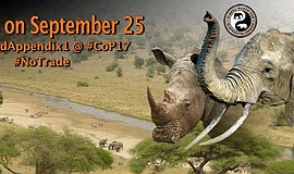 Promotional flier for the Global March for Elephants and Rhinos.