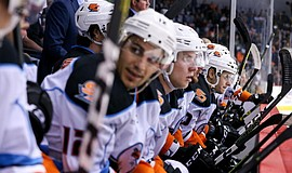 Photo of San Diego Gulls players on the bench, ready to go the ice.