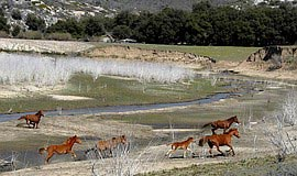 Horses at Lake Sutherland. Courtesy of San Dieguito River Valley Conservancy.