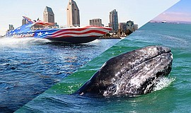 Promotional photo of the Patriot high speed jet boat and a whale.