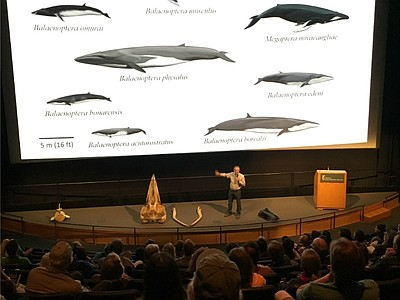 Talks By Scientists At Natural History Museum Dc