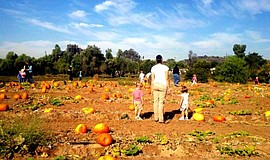 Promotional photo guests at a pumpkin patch. Courtesy of Farm Stand West & Fr...