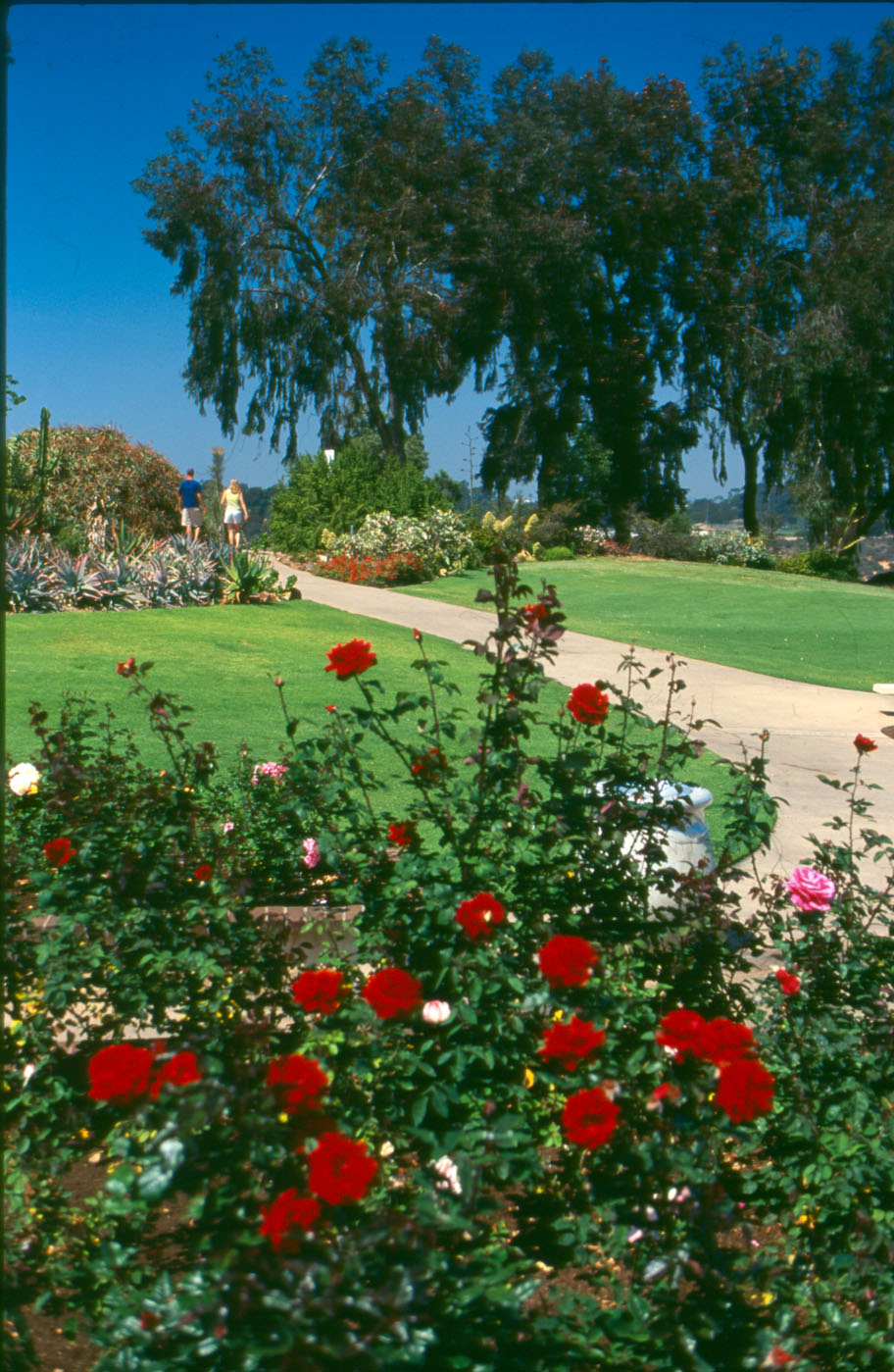 Balboa Park Rose Garden Needs Volunteers August 16 2016
