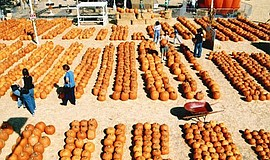 Promotional photo of a Pumpkin Station. The National City Pumpkin Station fro...