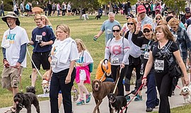 Promotional photo of the Walk For Animals - San Diego. Courtesy of San Diego ...