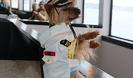 A pet at the annual Pet Day on the Bay. Courtesy of Hornblower Cruises & Events.