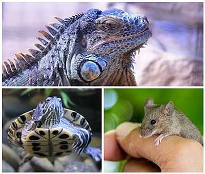 Photo montage of animals. Courtesy of the Living Coast Discovery Center.