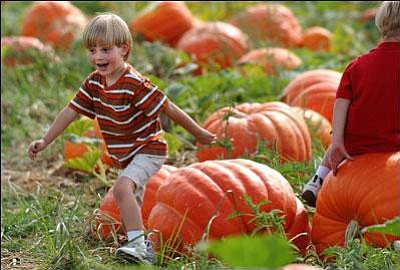Promotional photo of the Pumpkin Patch at Bates Nut Farm