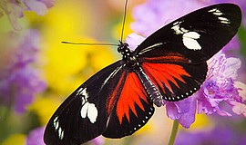 Promotional photo for Butterfly Jungle 2017 at San Diego Zoo Safari Park, Mar...