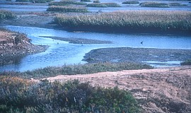 Promotional photo courtesy of the Tijuana River National Estuarine Research R...