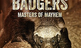 "Promotional photo of ""Honey Badgers: Masters of Mayhem"" cover. Courtesy of PBS."