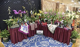 Promotional photo courtesy of the San Diego County Orchids Society.