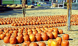 Promotional photo of the pumpkin patch at El Cajon Pumpkin Station