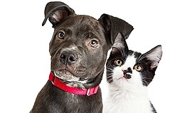 Promotional photo of dog and cat. Courtesy of the San Diego Human...