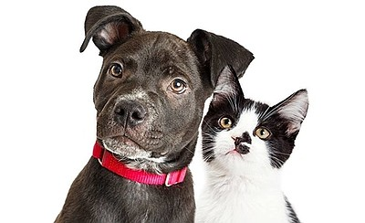 Promotional photo of dog and cat. Courtesy of the San Die...