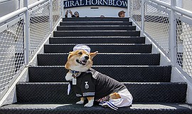 Promotional photo for the Bow Wow Brunch Cruise. Courtesy of Hornblower Cruis...
