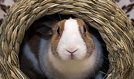 "Promotional photo for ""Growing Your Knowledge of Rabbit Care and Welfare."" Co..."