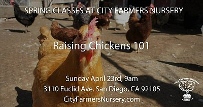 Promotional photo of City Farmers Nursery's Raising Chickens 101.