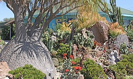 Promotional photo of the Undersea Succulent Garden courtesy of the San Diego ...