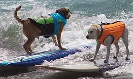 Promotional photo of dogs enjoying the waves. Courtesy of Surfdog Events.