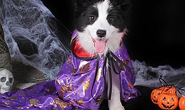 Promotional photo of dog dressed in costume. Courtesy of Grossmont Center.