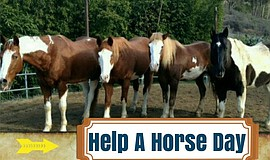 Promotional photo for LPR's Help A Horse Day celebration.
