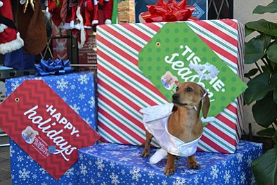 Photo from a previous Home for the Holidays celebration. Courtesy of the Helen Woodward Animal Center.