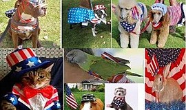 Promotional photos of contestants from the annual Patriotic Pet contest.