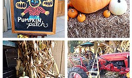 Promotional photo for the Pumpkin Patch @ Fran's Original Farm Stand