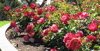 Photo of Inez Grant Parker Rose Garden courtesy of Balboa Park website.