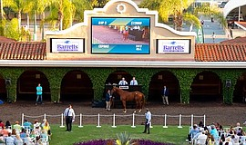 Paddock Sale at Del Mar