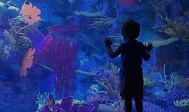 Promotional photo courtesy of Birch Aquarium at Scripps.