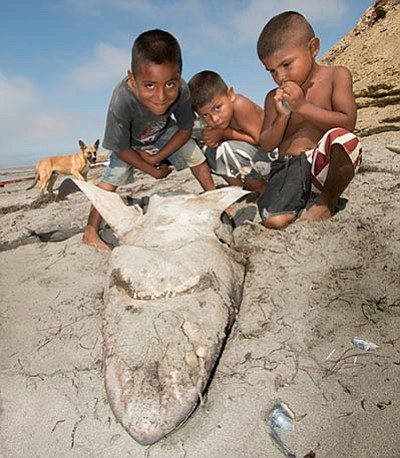 "Promotional photo for ""Baja's Wild Side: Sharks and Conse..."