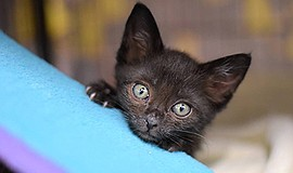Photo of one of the many animals that are up for adoption. Courtesy of the Sa...
